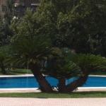 cyca gigante jardín la hípica