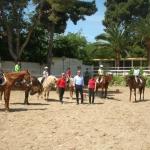 equitación varios caballos